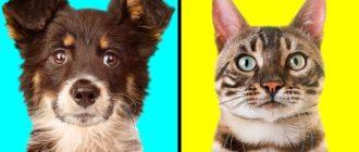 Собака думает что она кошка: фото, поведение, причины