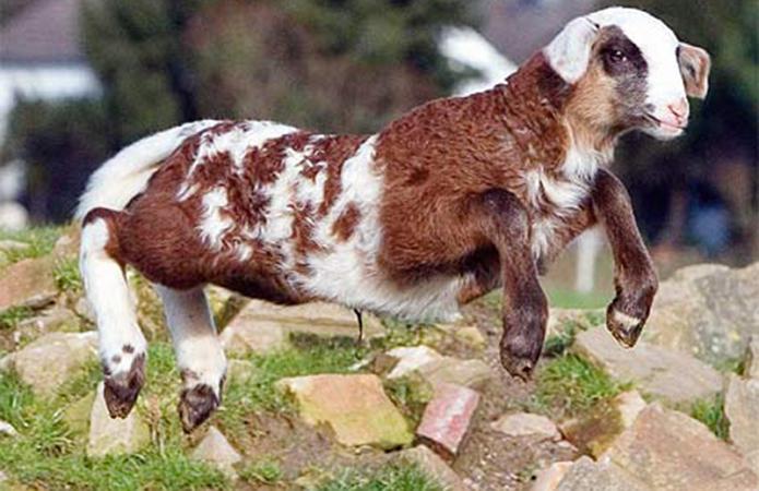 Топ 7 самых прикольных гибридов животного мира