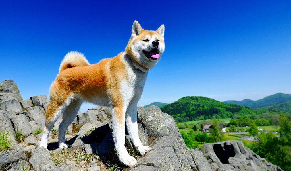 Топ 7 пород собак, которые никогда не бросят своего хозяина в беде