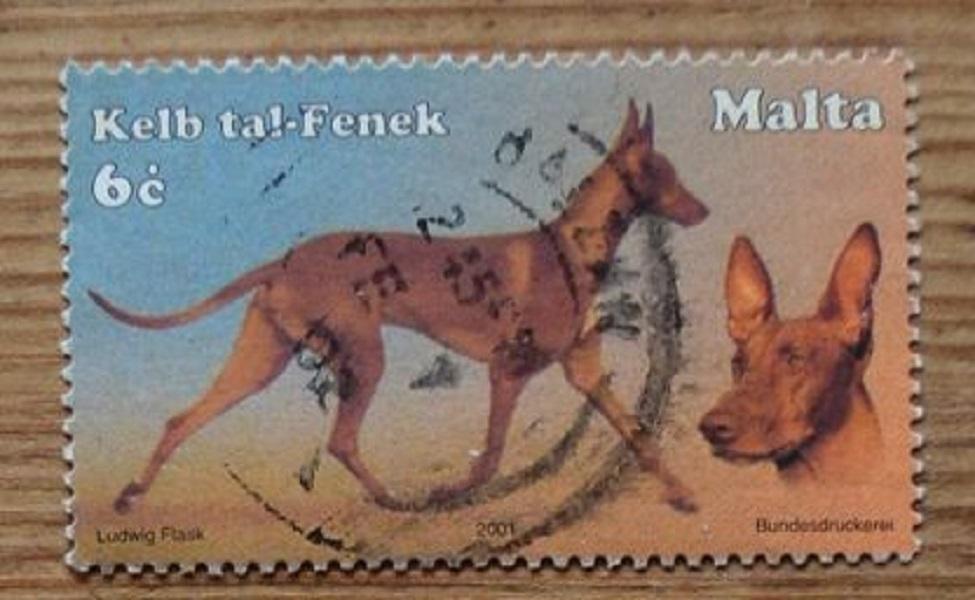 Самая первая порода собаки в мире: история появления Фараоновой собаки