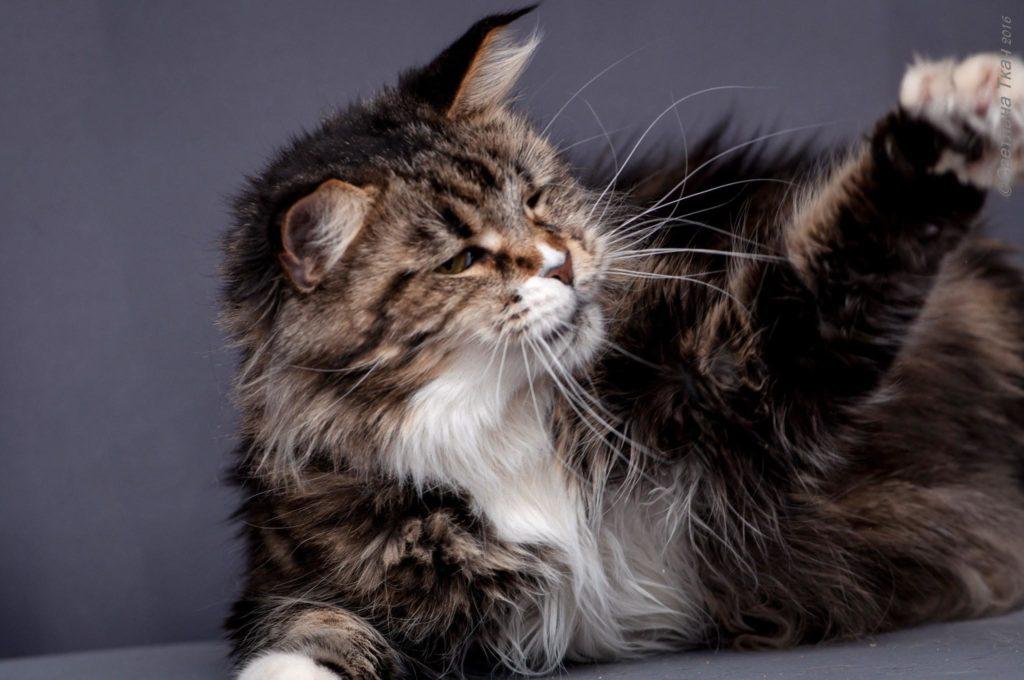 Злые кошки - откуда они берутся