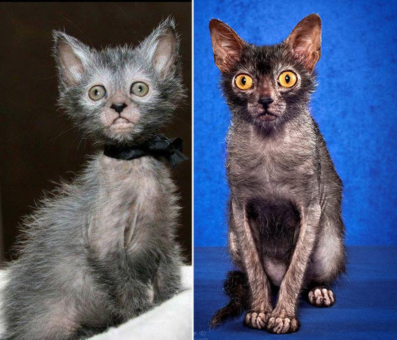 Топ 5 кошек, похожих на других животных (и не только)