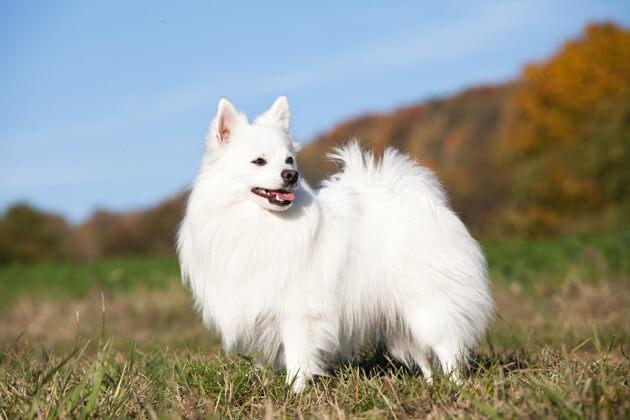 Белые собаки: топ 5 самых красивых пород
