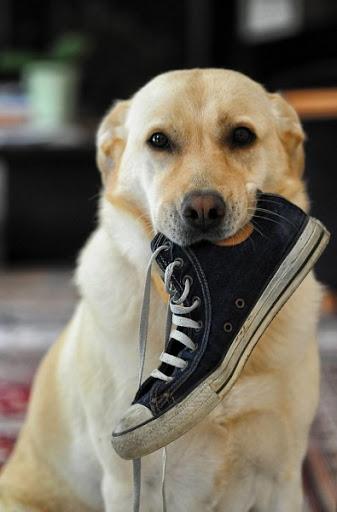 Как правильно заводить собаку