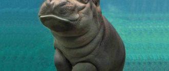 Милые животные: фото, внешний вид, причины, особенности