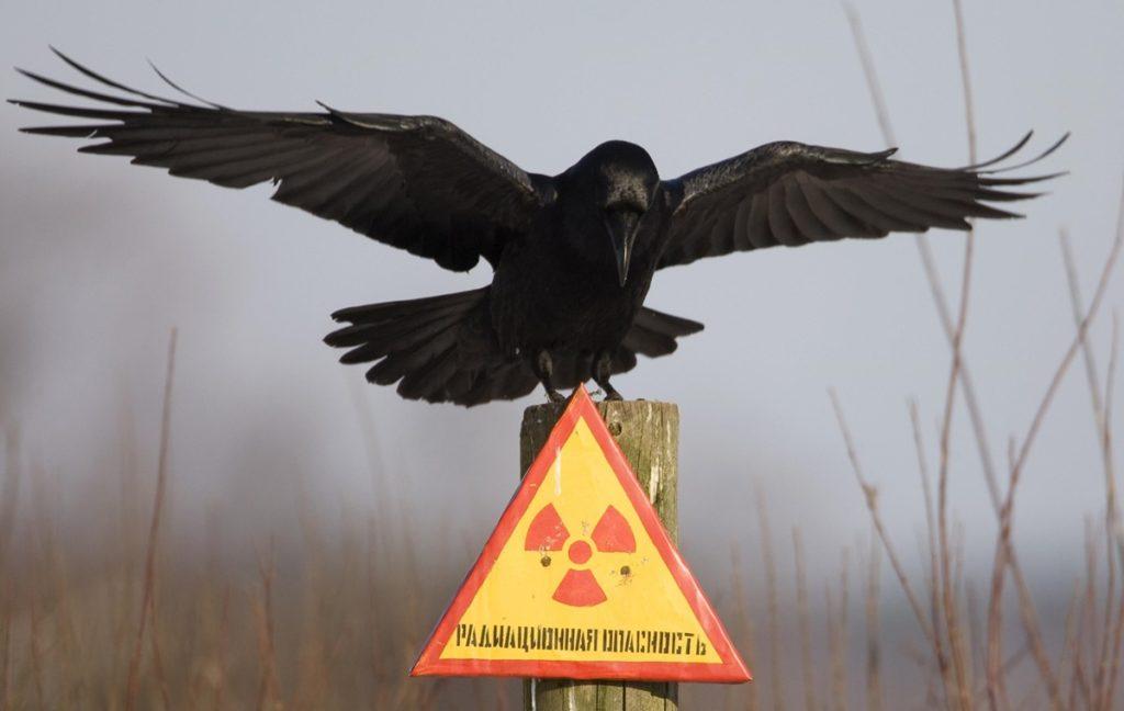 Чернобыльская зона: животные, фауна, поведение, причины
