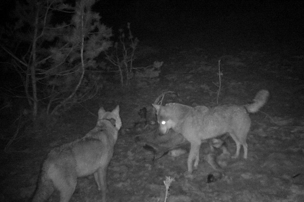 Фауна Чернобыльской зоны поражает разнообразием: исследования ученых