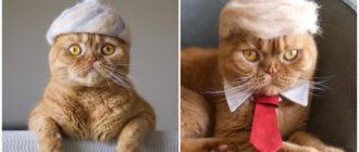 Шапки из шерсти кошек: фото, внешний вид, примеры, применение