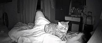 Кот мешал хозяину спать по ночам: фото, причины, камера