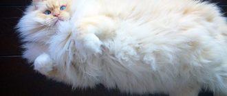 Инстаграм коты и кошки: фото, внешний вид, история, приколы