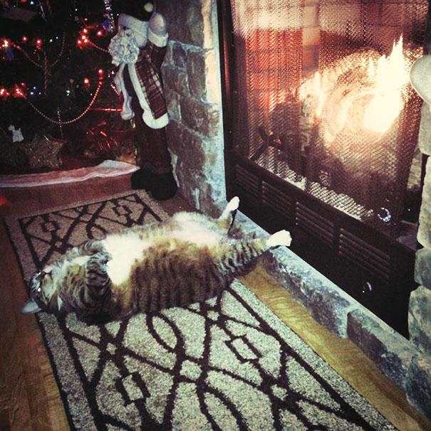 Топ 10 собак и кошек, которые спят в невероятных позах - фотоподборка