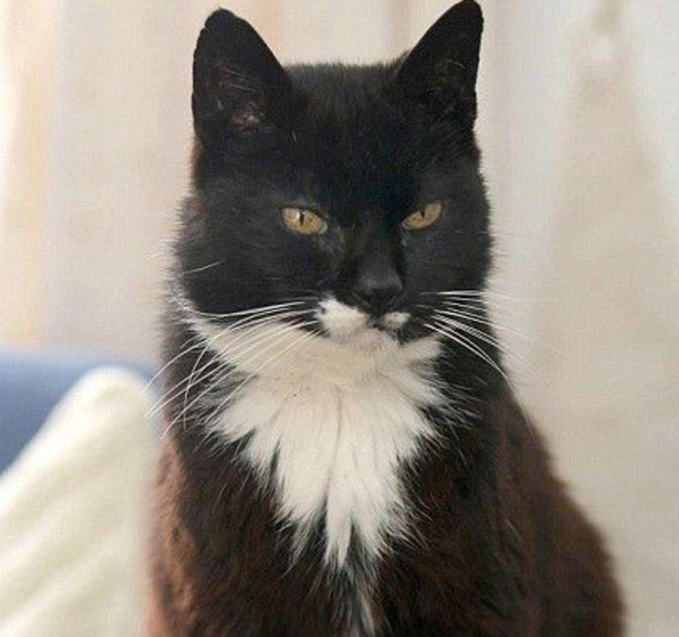 Самая старая кошка в мире умерла в возрасте 38 лет (Cream Puff)