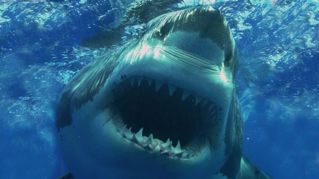 Топ 10 самых сильных челюстей на планете