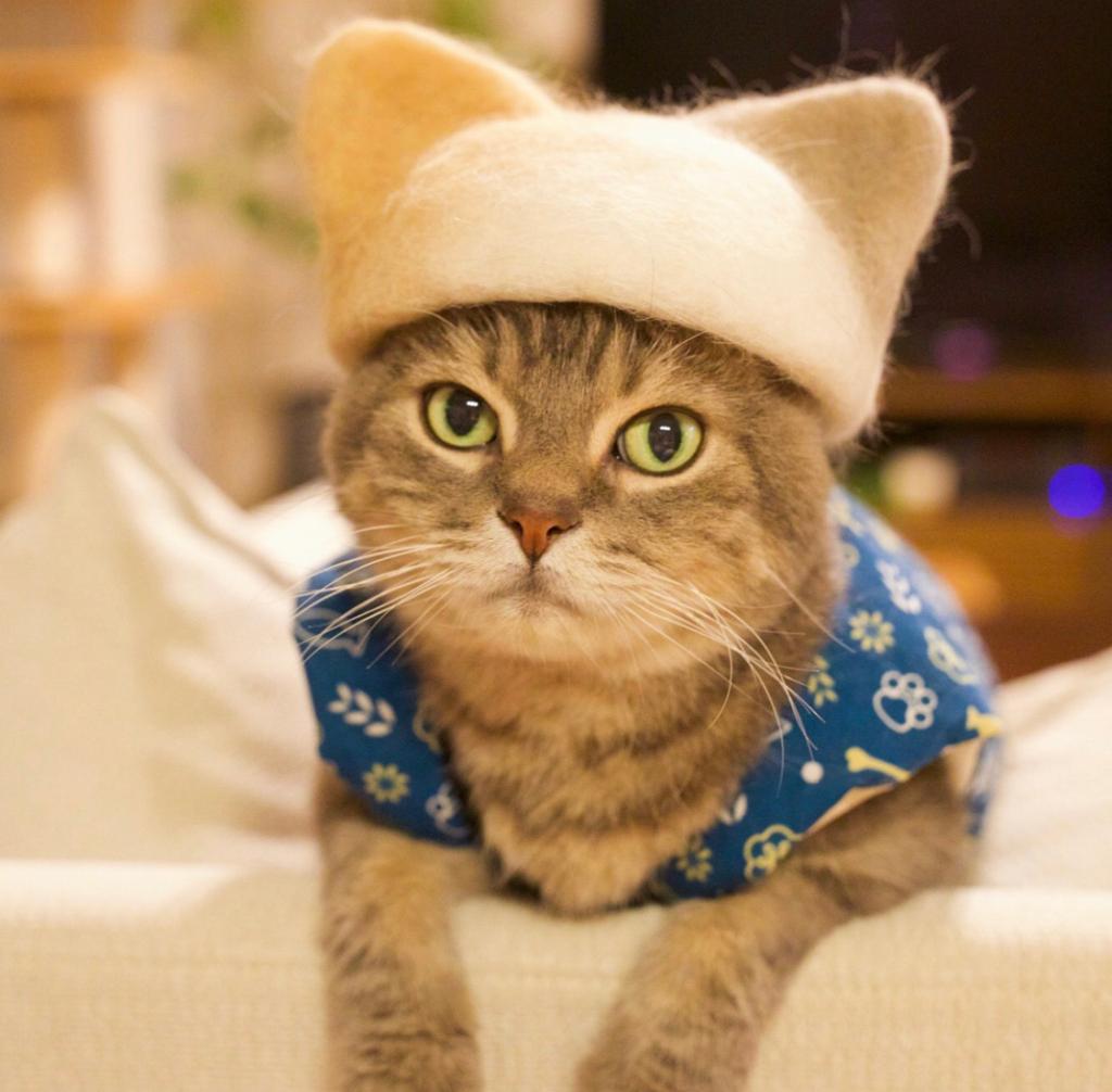 Прикольно и странно: кошки носят шапки, сделанные из их же шерсти (фото)