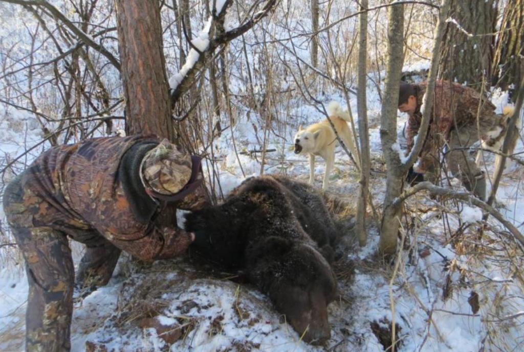 Нос к носу с медведем: реальная история читателя с хорошим концом