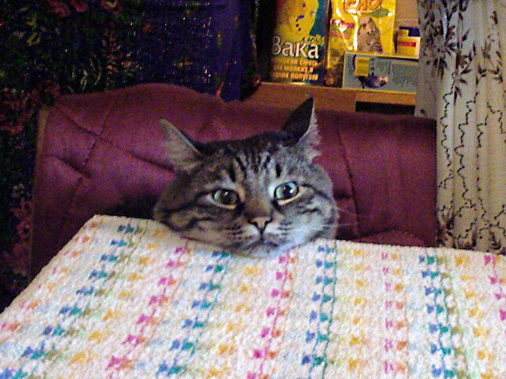 Вася: необычный кот, который сам пришёл в семью (реальная история от читателя)