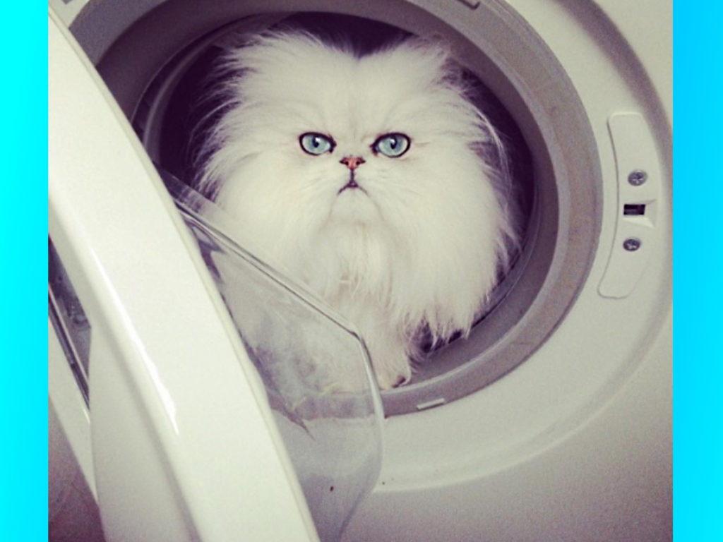 Кошачий Instagram – Топ 5 котов и кошек, которые вызывают только положительные эмоции