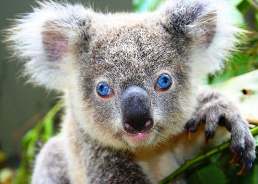 Топ 8 самых милых животных во вселенной
