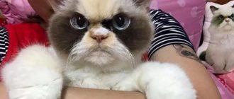 Волонтеры в Instagram: фото животных, польза, история