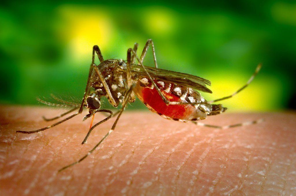 Почему комары кусают только избранных и чем они отличаются