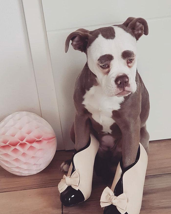 Мадам Брови - самая грустная и милая собака в инстаграме
