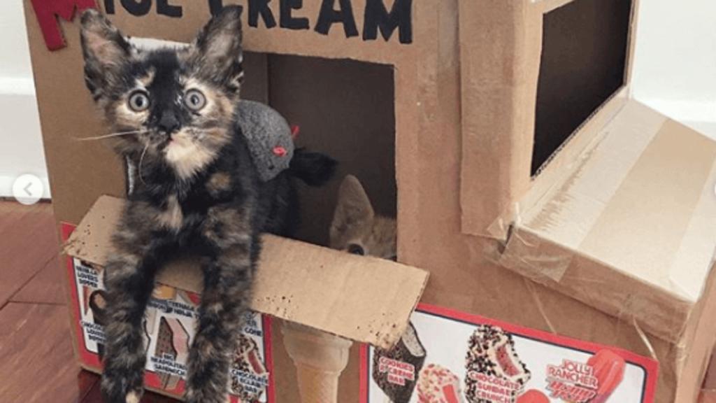 Волонтеры используют Instagram, чтобы найти котятам добрые ручки