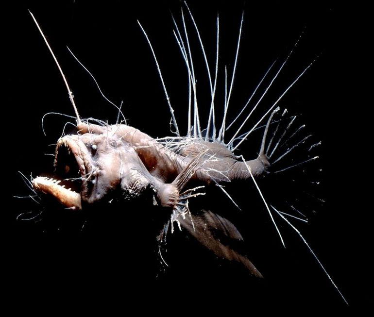 Топ 7 самых необычных рыб со всего мира
