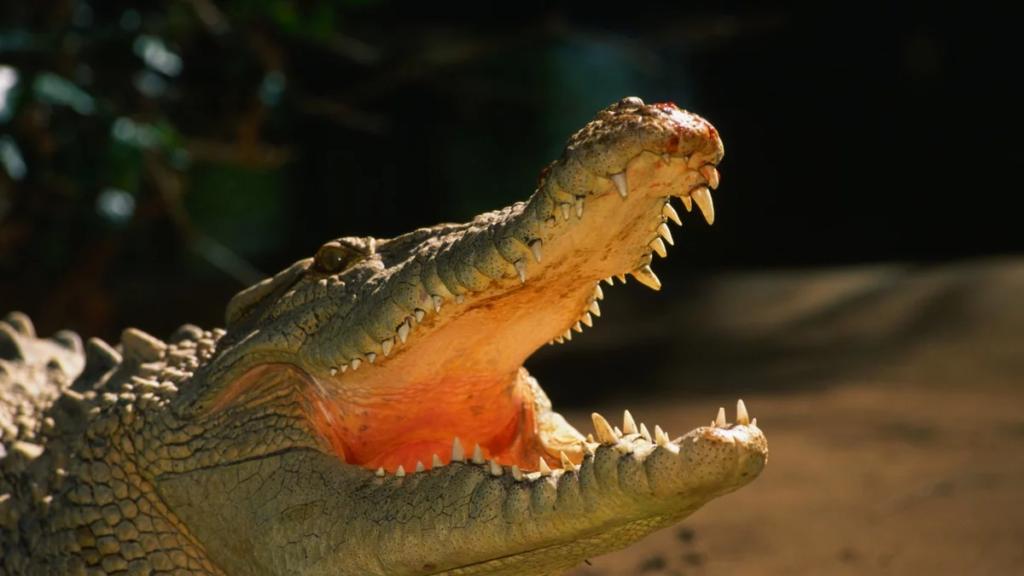 Симбиоз: действительно ли птицы чистят зубы крокодилам и аллигаторам