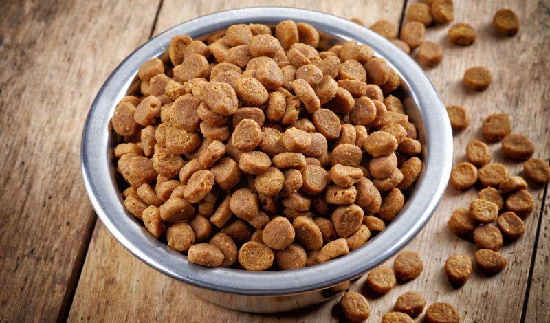 Сухой корм для собак - как правильно перейти на него