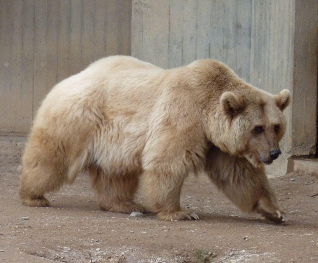5 удивительных пород животных, выведенных человеком