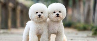 Маленькие породы собак: названия, фото, размеры, различия