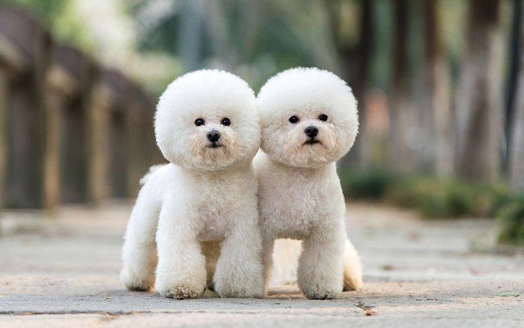 Топ 10 самых маленьких пород собак в мире