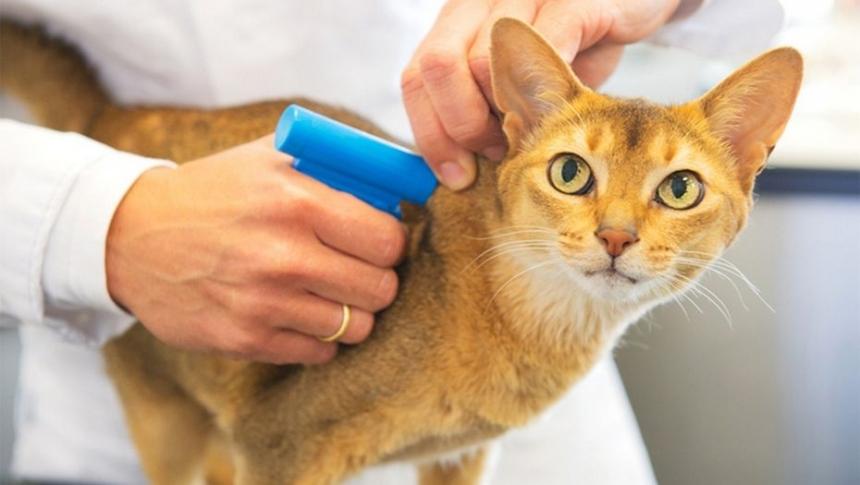 Для чего проводить процедуру чипирования домашних животных