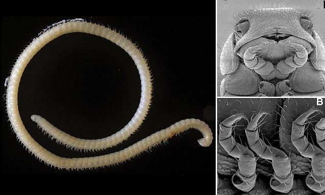 Обнаружено самое многоногое животное на Земле
