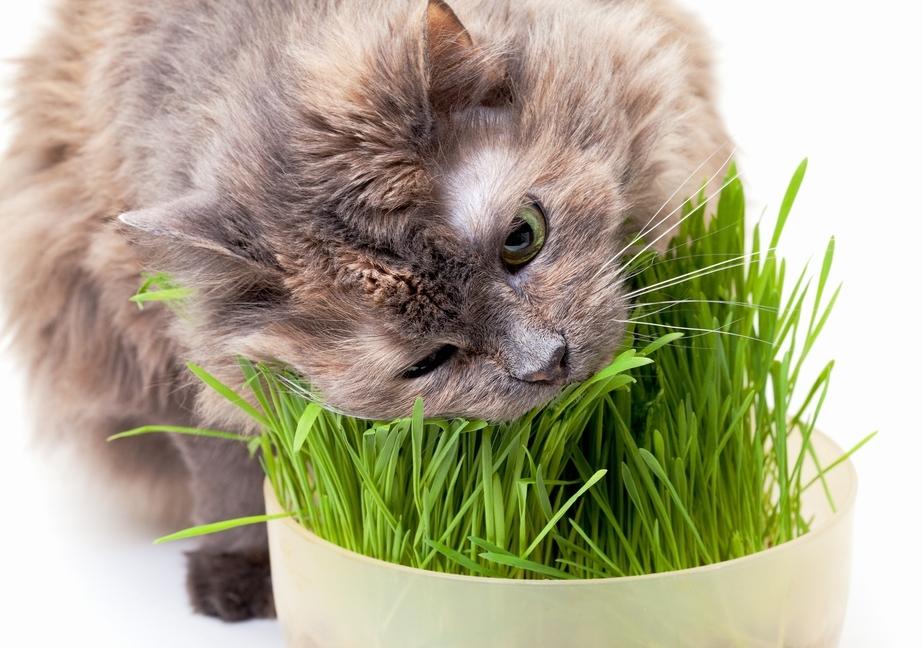 Как распознать авитаминоз у кошки