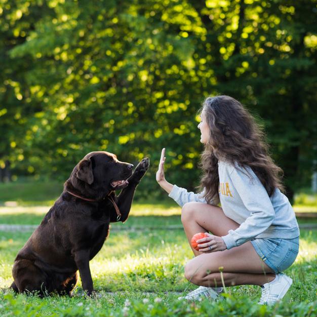 """Собаки """"подростки"""" — чего ждать в переходном возрасте и как себя вести хозяевам"""