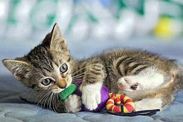 Как выбрать игрушки для котенка