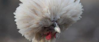 Красивая шерсть животных: фото, внешний вид, особенности