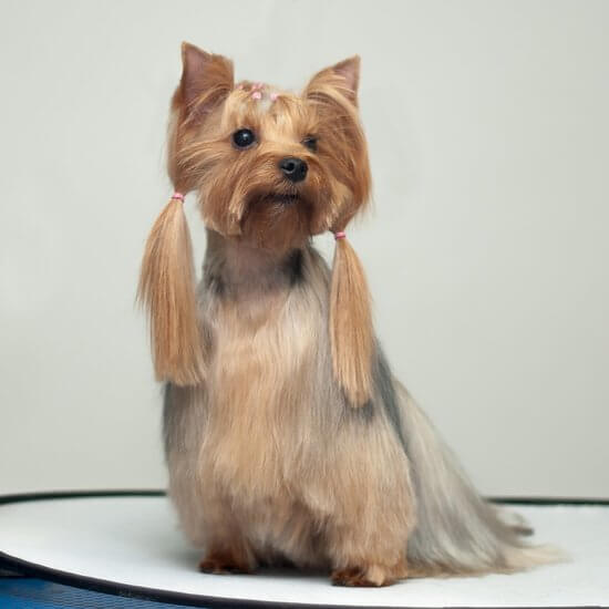 Сам себе собачий парикмахер: стрижка собаки своими руками