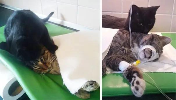 Котбрат Радеменес: удивительный кот работает сиделкой в ветеринарной клинике