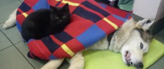 Кот сиделка в клинике: фото, история, причина, польза