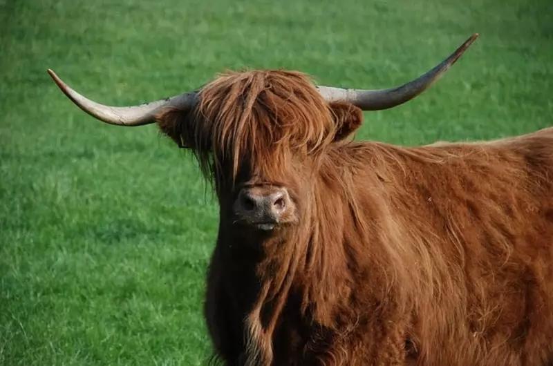 Модный приговор: животные, чьей шерсти и перьям могут позавидовать многие