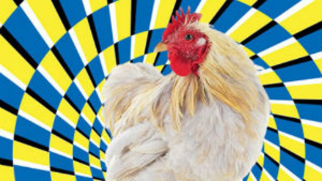 Магия для каждого: как загипнотизировать курицу