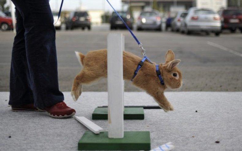 Как приручить кролика и приучить его к лотку