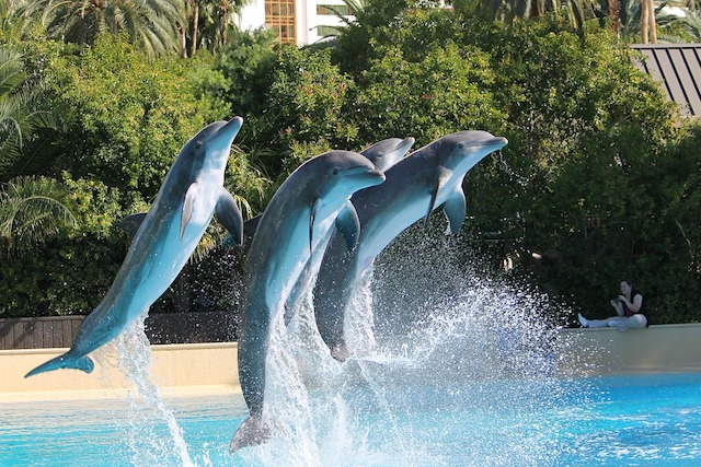 Дельфины придумывают друг другу имена и разговаривают на своем языке