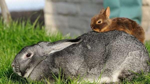 Разведение кроликов на приусадебном участке – особенности и перспективы
