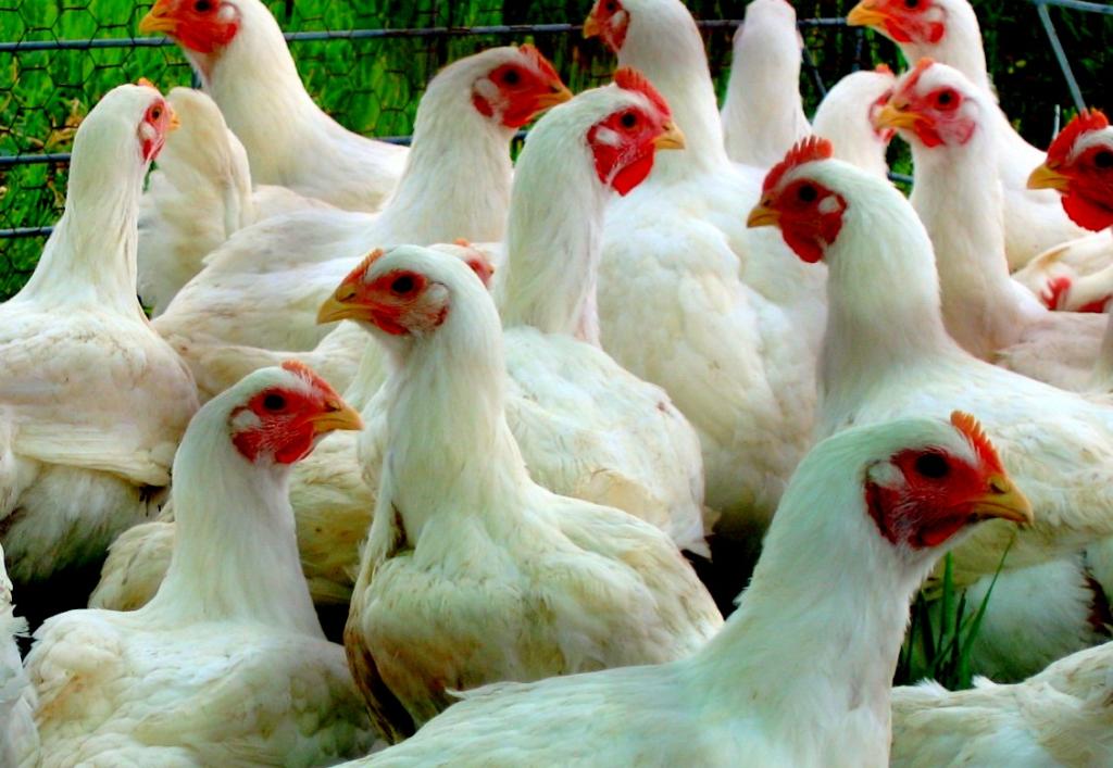 Все что нужно знать о сельском хозяйстве