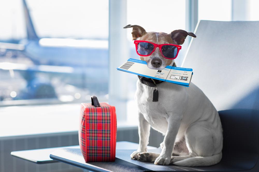 Правила перевозки собаки в самолете, машине, поезде или автобусе