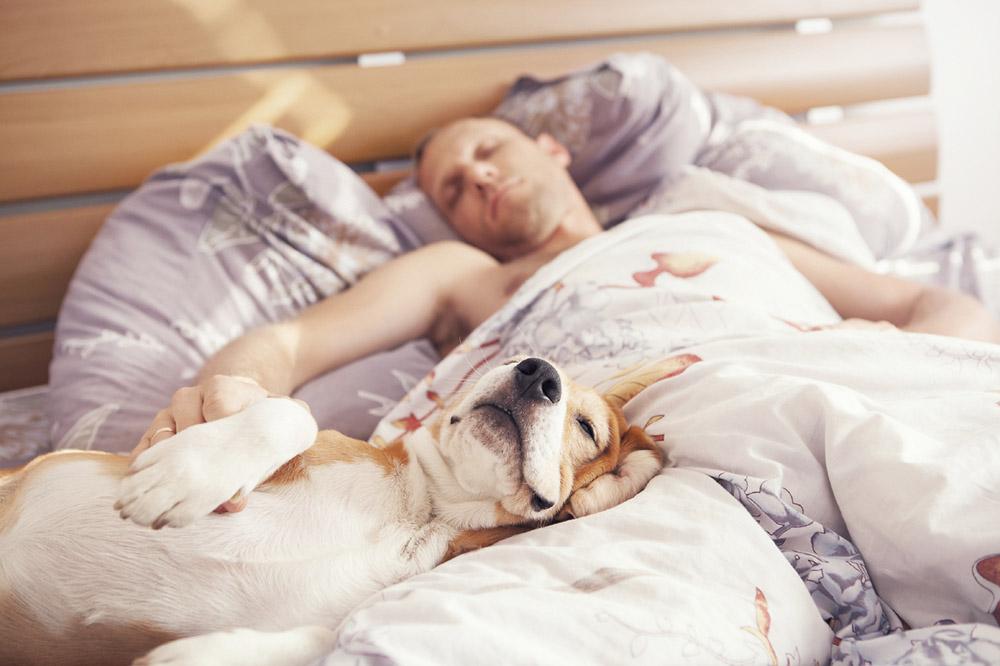 Чем грозит человеку сон с собакой в одной постели
