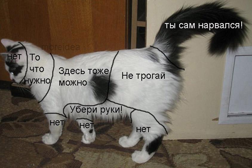 Домашняя любимица - кошка: как приласкать, чтобы не обидеть?
